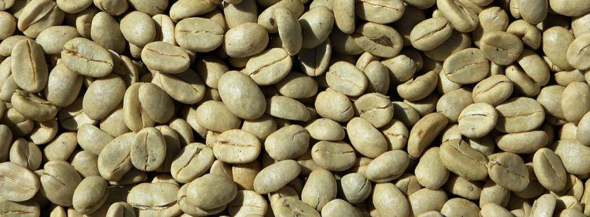 zielona-kawa
