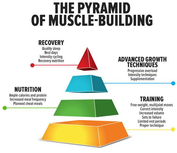budowa-masy-miesniowej-piramida